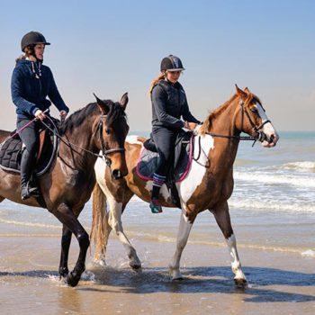 Assurance cheval st nazaire assurance mma balzane